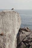 Η φύση της Κριμαίας Στοκ φωτογραφία με δικαίωμα ελεύθερης χρήσης