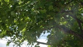 Η φύση του Μαυροβουνίου Εγκαταστάσεις, λουλούδια, δέντρα αδρεναλίνης απόθεμα βίντεο