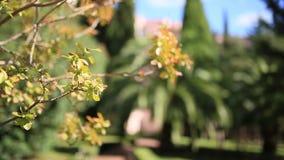 Η φύση του Μαυροβουνίου Εγκαταστάσεις, λουλούδια, δέντρα αδρεναλίνης φιλμ μικρού μήκους