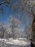 Η φύση το χειμώνα, μετά από τις χιονοπτώσεις, τα δέντρα και τους θάμνους στο χιόνι ξεφλουδίζει Στοκ Φωτογραφία