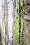 Η φύση των Ουραλίων Στοκ Φωτογραφία