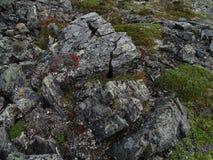 Η φύση Chukotkа Το πρώιμο φθινόπωρο Στοκ φωτογραφία με δικαίωμα ελεύθερης χρήσης