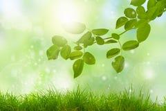 Η φύση Eco/η πράσινη και μπλε περίληψη το υπόβαθρο με το s στοκ φωτογραφίες