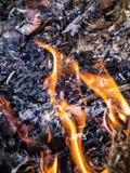 Η φλόγα είναι η δύναμη του καψίματος στη ζούγκλα Στοκ Εικόνα