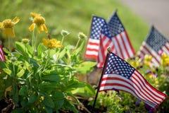 Η χαμηλή άποψη γωνίας των λίγων Ηνωμένων Πολιτειών σημαιοστολίζω στο κρεβάτι λουλουδιών στοκ φωτογραφία