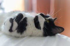 Η χαριτωμένη γάτα βρίσκεται στο κρεβάτι και να ονειρευτεί για ένα πουλί στοκ φωτογραφίες με δικαίωμα ελεύθερης χρήσης