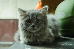Η χαριτωμένη γάτα είναι κρύα λόγω της βροχής στοκ εικόνες