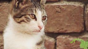 Η χαριτωμένη γάτα εξετάζει το κυνήγι του στοκ εικόνες