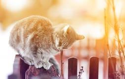 Η χαριτωμένη γάτα εχαΐδευσε στο φράκτη, οι προσοχές του ιδιαίτερες από την ευχαρίστηση στοκ φωτογραφία
