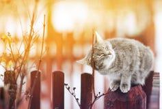 Η χαριτωμένη γάτα εχαΐδευσε στο φράκτη, οι προσοχές του ιδιαίτερες από την ευχαρίστηση στοκ φωτογραφία με δικαίωμα ελεύθερης χρήσης