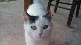 Η χαριτωμένη γάτα μου Στοκ εικόνα με δικαίωμα ελεύθερης χρήσης