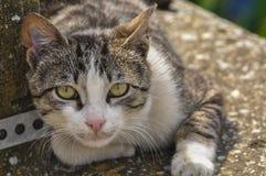 Η χαριτωμένη γάτα ξαπλώνει στο σκυρόδεμα Η οκνηρή γάτα κάθεται στο σκυρόδεμα Πορτρέτο της γάτας στο έδαφος στοκ φωτογραφία