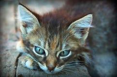 Η χαριτωμένη γάτα που το γκρίζο γατάκι γατών βρίσκεται στο γατάκι ποδιών είναι λυπημένη αναμονή γατακιών Στοκ Εικόνα