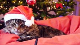 Η χαριτωμένη γάτα του Μαίην Coon δεδομένου ότι Άγιος Βασίλης φορά τα Χριστούγεννα ΚΑΠ κάθεται στο μαξιλάρι σε ένα όμορφο νέο διακ απόθεμα βίντεο