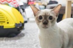 Η χαριτωμένη τοπική γάτα που ζαλίζεται κοιτάζει στοκ εικόνες με δικαίωμα ελεύθερης χρήσης