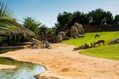 Η χαλάρωση της άποψης του μεγάλου κλουβιού με τα ζώα στον πράσινο χορτοτάπητα χλόης, στρώνει με άμμο και ποτίζει Στοκ Φωτογραφίες