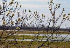 Η χειμερινή πτώση τομέων άνοιξης λουλουδιών οφθαλμών ουρανού κλάδων δέντρων ιτιών αφήνει στο φθινόπωρο το νεκρό κίτρινο καλώδιο δ στοκ εικόνα με δικαίωμα ελεύθερης χρήσης