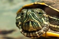 η χελώνα Στοκ φωτογραφίες με δικαίωμα ελεύθερης χρήσης