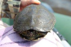 Η χελώνα Στοκ φωτογραφία με δικαίωμα ελεύθερης χρήσης