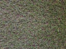 η χλόη ανασκόπησης απομόνωσε το λευκό Φρέσκια σύσταση χλόης χορτοταπήτων πράσινος τέλειος χλόης Στοκ φωτογραφία με δικαίωμα ελεύθερης χρήσης