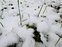 Η χλόη κήπων κάτω από το πρώτο άσπρο χιόνι Στοκ Φωτογραφίες