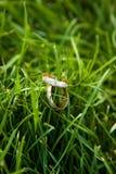 η χλόη χτυπά το γάμο Στοκ Φωτογραφία