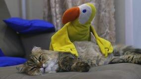 Η χνουδωτή όμορφη γάτα βρίσκεται στον καναπέ με ένα κίτρινο παιχνίδι σε αργή κίνηση, 1920x1080, hd απόθεμα βίντεο
