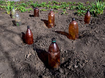 Η χρήση των πλαστικών μπουκαλιών για να προστατεύσει τα σπορόφυτα στο θερινό εξοχικό σπίτι τους Στοκ εικόνα με δικαίωμα ελεύθερης χρήσης
