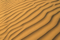 η χρυσή άμμος ανασκόπησης εβλάστησε την κατακόρυφο Στοκ φωτογραφίες με δικαίωμα ελεύθερης χρήσης