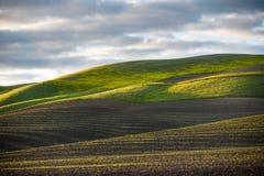 Η χρυσή ώρα του ηλιοβασιλέματος φωτίζει μια ειδυλλιακή σκηνή των σειρών των πρόσφατα βλαστημένων πράσινων συγκομιδών και ενός χλο στοκ εικόνα με δικαίωμα ελεύθερης χρήσης
