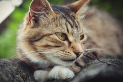 Η χρωματισμένη τιγρέ γάτα βρίσκεται σε μια παλαιά στέγη στοκ φωτογραφία