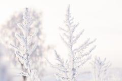 Η χλόη λιβαδιών που καλύπτεται με τον παγετό σε ένα ελαφρύ υπόβαθρο Στοκ φωτογραφία με δικαίωμα ελεύθερης χρήσης