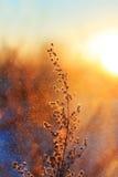 Η χλόη καλύπτεται με το άσπρο χνουδωτό πάγωμα και το αναμμένο κόκκινο από τον ήλιο Στοκ φωτογραφία με δικαίωμα ελεύθερης χρήσης