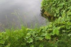 Η χλόη κοντά στο νερό Στοκ φωτογραφία με δικαίωμα ελεύθερης χρήσης