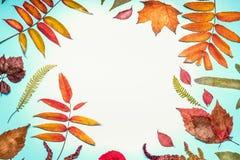 Η όμορφα εποχιακά σύνθεση ή τα σύνορα φθινοπώρου έκανε με τα διάφορα ζωηρόχρωμα φύλλα πτώσης στο τυρκουάζ μπλε υπόβαθρο, τοπ άποψ Στοκ Φωτογραφία