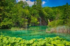 Η όμορφη άποψη των καταρρακτών στις λίμνες Plitvice στοκ εικόνα με δικαίωμα ελεύθερης χρήσης