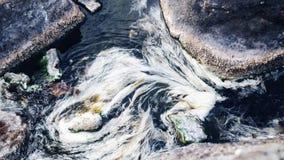 Η όμορφη άσπρη ροή φυκιών στον ποταμό Στοκ Φωτογραφίες