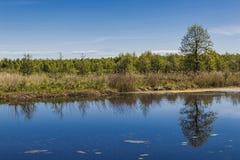 Η όμορφη αντανάκλαση δέντρων Στοκ Εικόνα