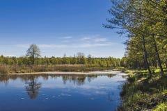 Η όμορφη αντανάκλαση δέντρων Στοκ φωτογραφία με δικαίωμα ελεύθερης χρήσης