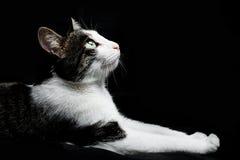 Η όμορφη γάτα βρίσκεται Στοκ Φωτογραφίες