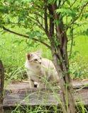 Η όμορφη γάτα στην πράσινη χλόη Στοκ φωτογραφία με δικαίωμα ελεύθερης χρήσης