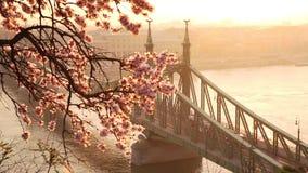 Η όμορφη γέφυρα ελευθερίας στην ανατολή με το άνθος κερασιών την άνοιξη της Βουδαπέστης έχει φθάσει στη Βουδαπέστη φιλμ μικρού μήκους