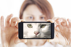 Η όμορφη γυναίκα παίρνει ένα selfie και γίνεται μια γάτα Στοκ εικόνα με δικαίωμα ελεύθερης χρήσης
