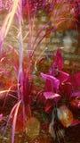 Η όμορφη εικόνα κήπων λουλουδιών μου Στοκ εικόνα με δικαίωμα ελεύθερης χρήσης