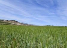 Η όμορφη επαρχία της Ανδαλουσίας η Ισπανία Στοκ Εικόνες