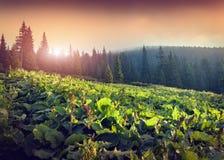 Η όμορφη ηλιόλουστη ημέρα είναι στο τοπίο βουνών Στοκ Φωτογραφίες