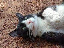Η όμορφη και ελκυστική γάτα Στοκ φωτογραφία με δικαίωμα ελεύθερης χρήσης