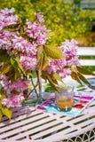 Η όμορφη και ρομαντική σκηνή στον εγχώριο κήπο με ένα βάζο του ιαπωνικού δέντρου κερασιών ανθίζει Στοκ Φωτογραφία