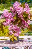 Η όμορφη και ρομαντική σκηνή στον εγχώριο κήπο με ένα βάζο του ιαπωνικού δέντρου κερασιών ανθίζει Στοκ φωτογραφίες με δικαίωμα ελεύθερης χρήσης