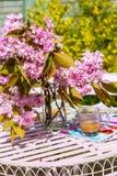 Η όμορφη και ρομαντική σκηνή στον εγχώριο κήπο με ένα βάζο του ιαπωνικού δέντρου κερασιών ανθίζει Στοκ εικόνες με δικαίωμα ελεύθερης χρήσης
